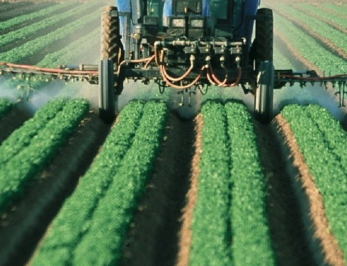 High Pesticide Exposure In Womb Linked To Lower IQ