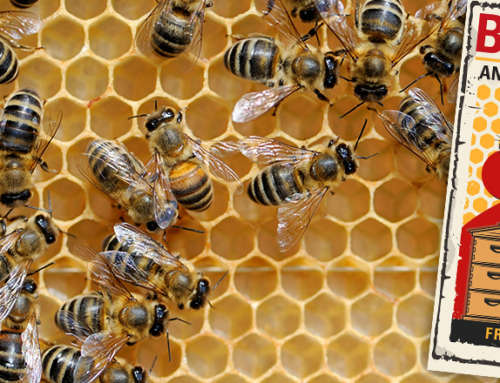 A peek into the secret life of bees